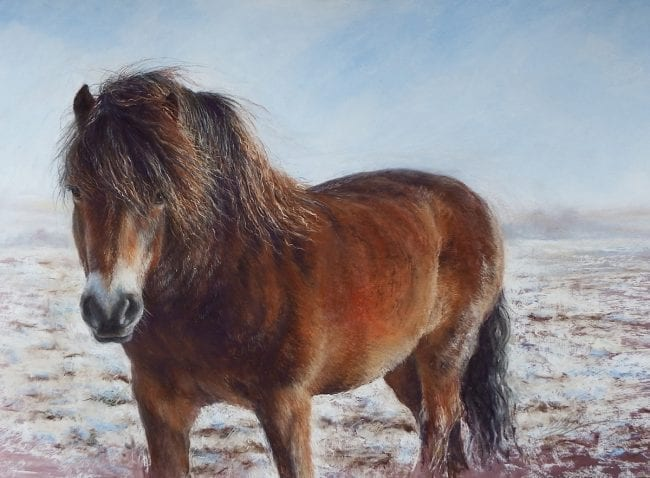 A pastel painting of a young Exmoor pony, standing in the snow covered landscape of Exmoor. The rich copper and golden brown colours of the native pony's thick winter coat contrast with the bright blue of the sky and the white snow. His long mane is blowing in the wind.
