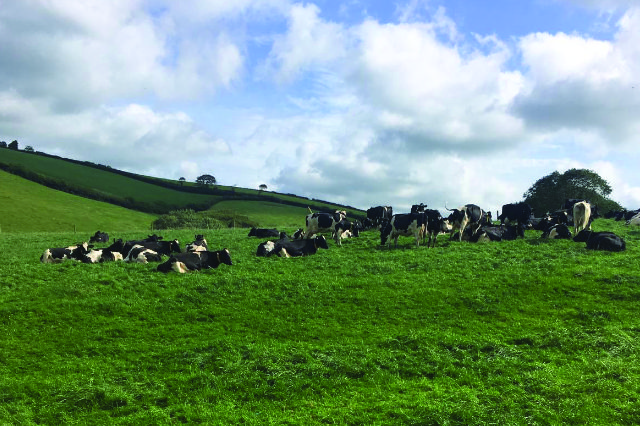 Grouping and sorting cattle