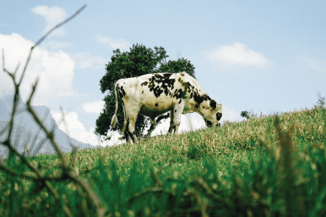 Grazing rejection and management